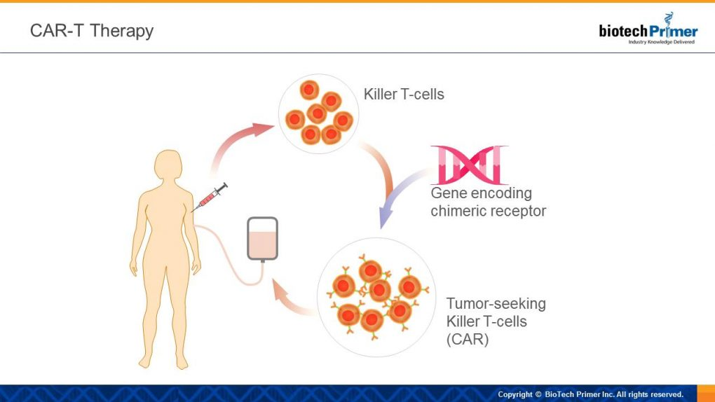Nk Cell Activation Through Kir Hla Interactions Decreases Leukem likewise Intraepidermal Carcinoma additionally Fulltext moreover 319842 in addition The Top Tech Of 2016. on white blood cell