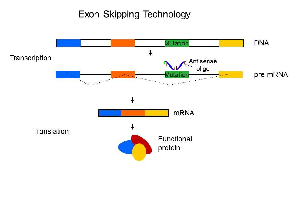 Exon Skipping Technology