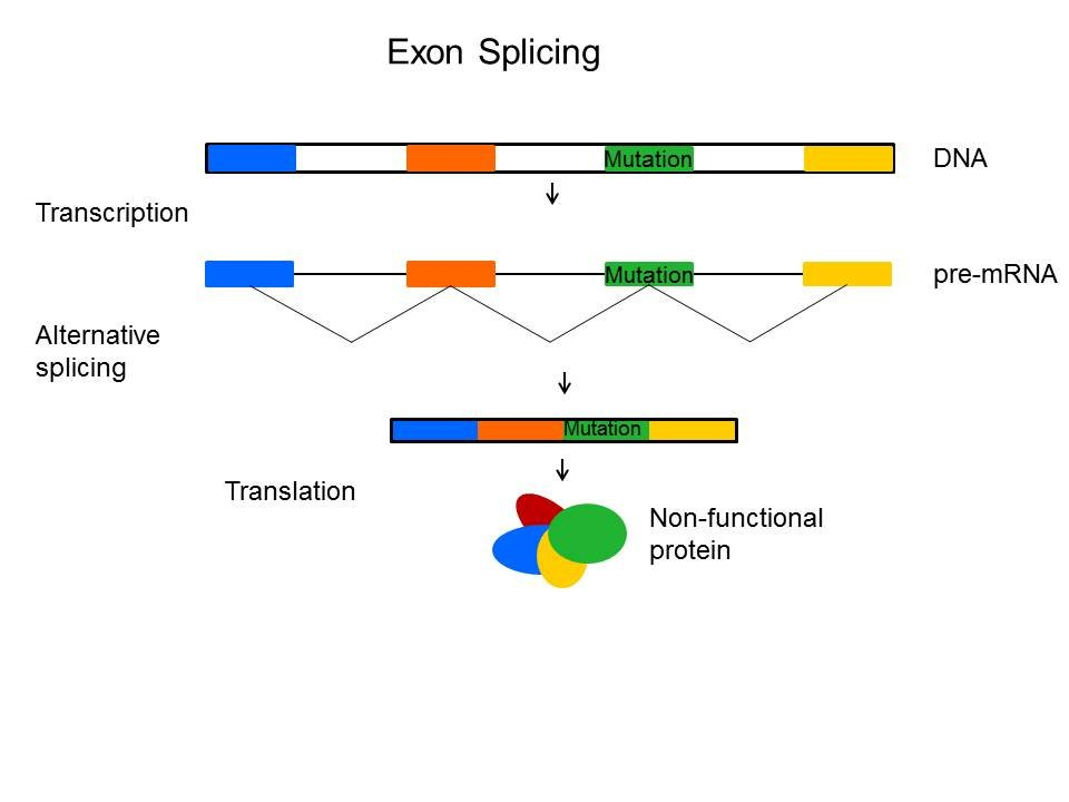 Exon Splicing