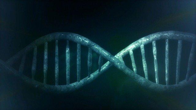 PARP1 Inhibitor Takes On Pancreatic Cancer