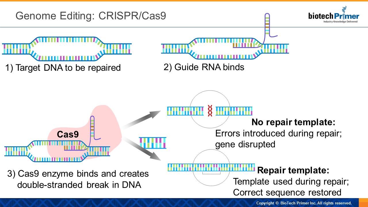 Genome Editing: CRISPR/Cas9