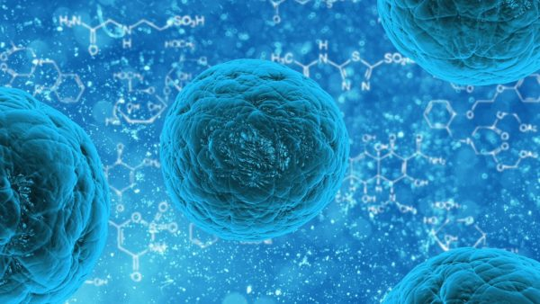 A Skin Cell With Stem Cell Diversity?