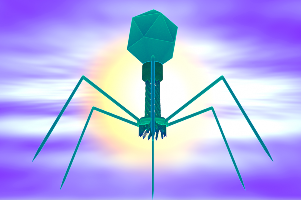 Phage Therapy: New Hope For Antibiotic-Resistant Bacteria