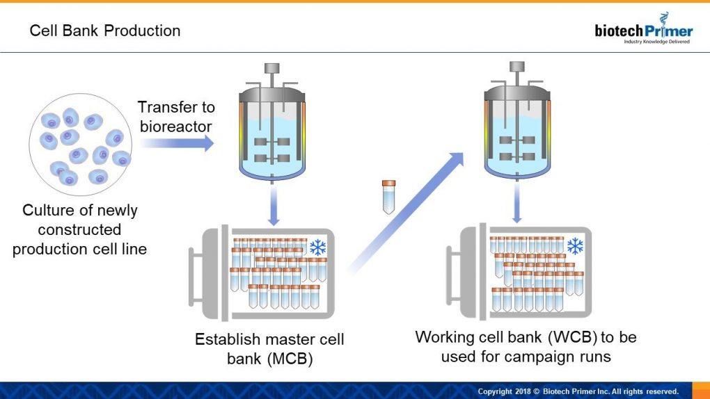 cell bank production illustration