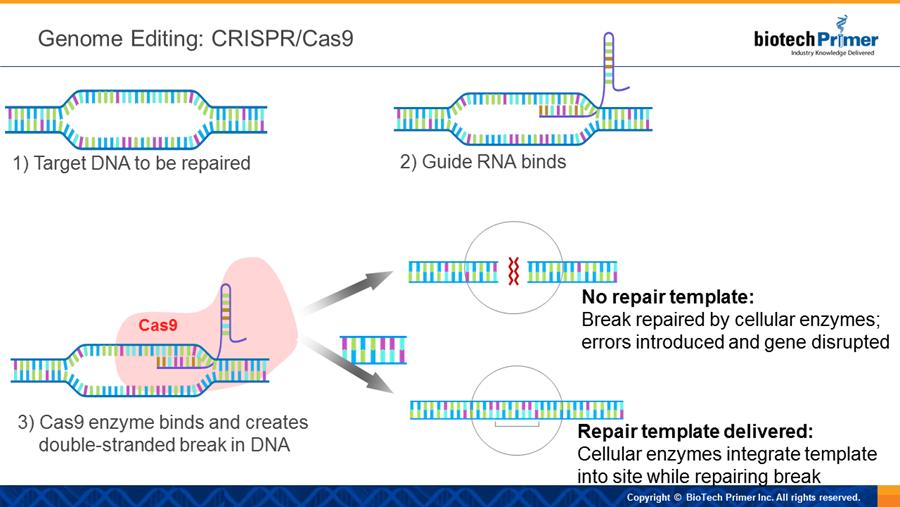 genetic engineering illustration